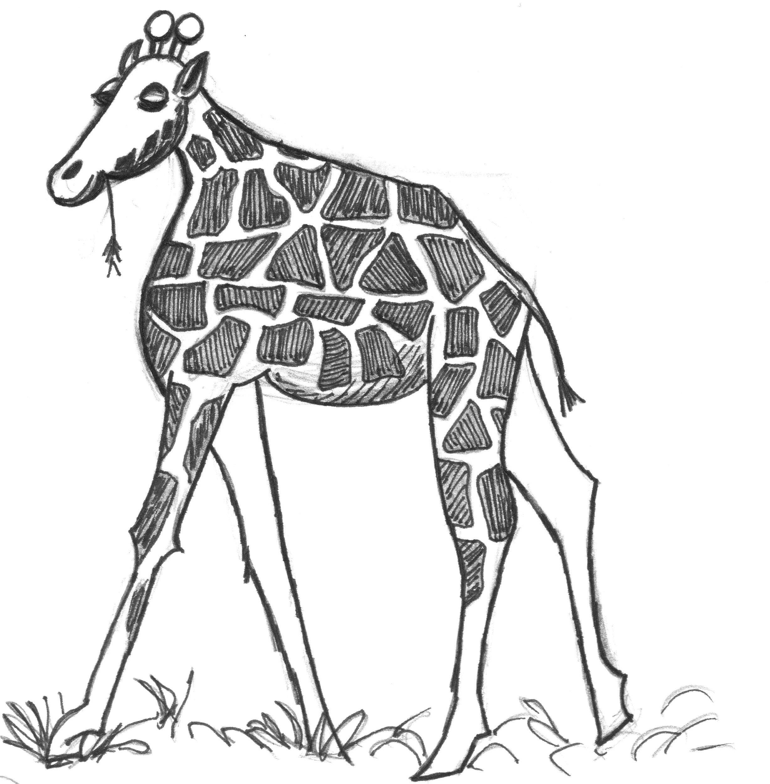 Giraffe With Short Neck Drawing Short Neck Giraffe